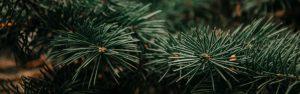eenzaamheid_aandacht_voor_overledene_met_herinneringsboom