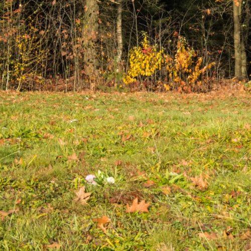 Natuurbegraafplaats-Heidepol