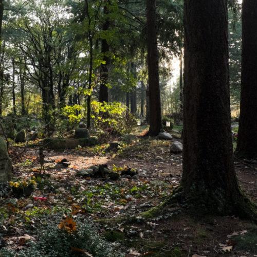 Natuurbegraafplaats-Westerwolde